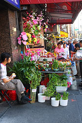 lucky bamboo vendor